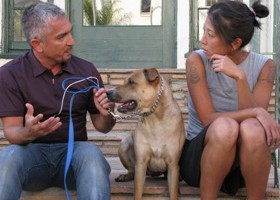 Los Angeles, CA: Cesar Milan and Royce sit on her front steps with Chase. Chase has a loathing self-image. When he passes by a mirror or window he lunges at his own reflection. (Photo Credit: © MPH - Emery/Sumner Joint Venture)
