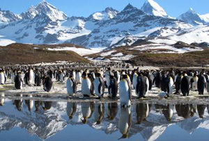 Discovery and BBC's Frozen Planet