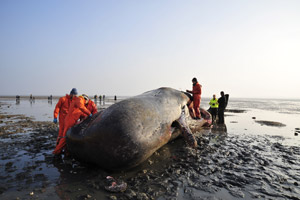 Inside Nature's Giants - Sperm Whale