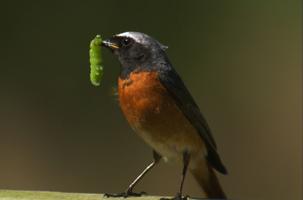 Secret Life of Birds