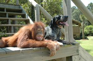 Unlikely Animal Friends