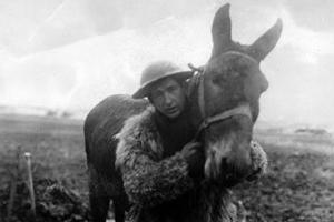 War Horse: The True Story