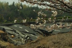 Tsunami and the Cherry Blossom