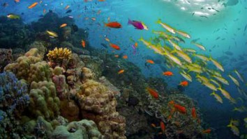 Great Barrier Reef (Animal Planet/BBC/James Brickell)