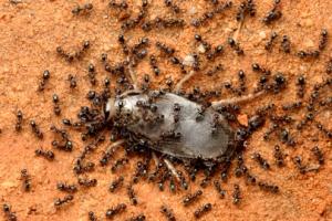 Monster Bug Wars