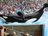 "MIPTV '13: Exclusive clip from ""Blackfish"""