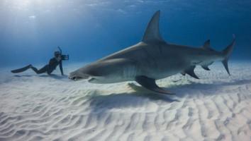 Bahama Blue (Photo: Grant Johnson)