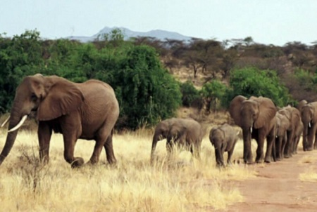 Poaching Wars Tom Hardy