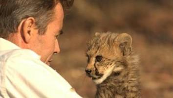 Man Cheetah Wild