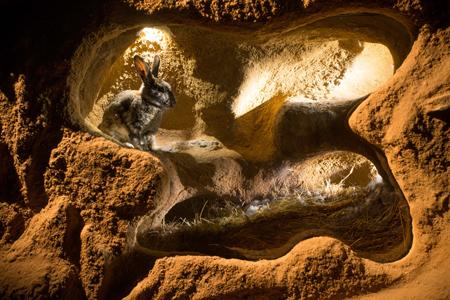 The Burrowers: Animals Underground (Photo courtesy of BBC)