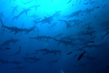 Shark Junction