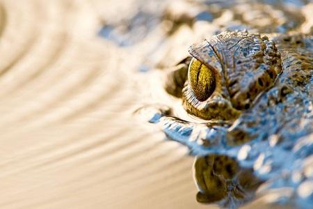 Florida Untamed Croc Country