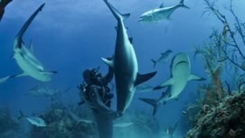 Bahama blue