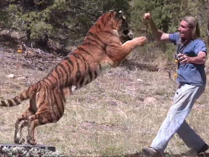 Copied from StreamDaily - Tiger Attack Stunt