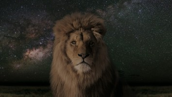 A Night on Earth - Lion
