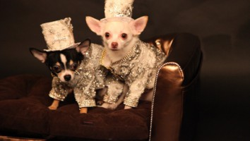 World's Richest Dogs