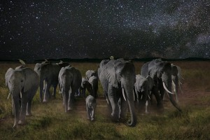 a night on earth - elephants