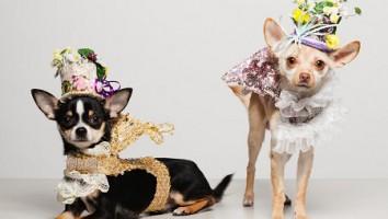 World's Richest Dogs