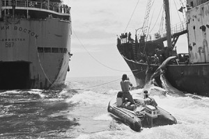 soviet whaling action in north pacific