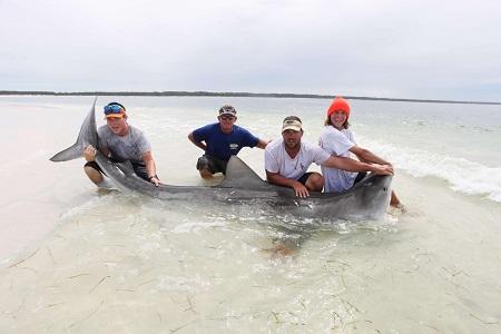 Landing Sharks