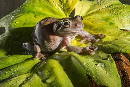 Monster Frog