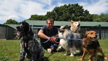 Dogs Their Secret Lives