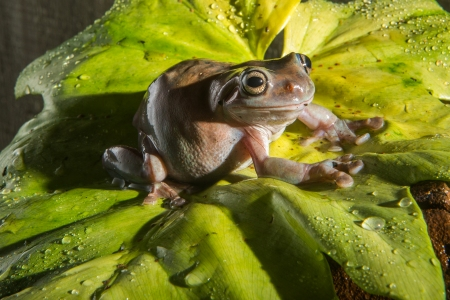 Incredible Frogs
