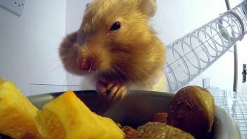 BBC Pets Wild At Heart