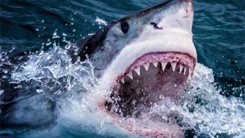 BBC Earth Sharks