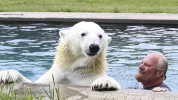 There's a Polar Bear in My Pool