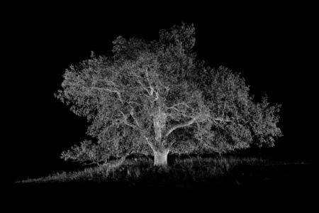 Oak Tree: Nature's Greatest Survivor