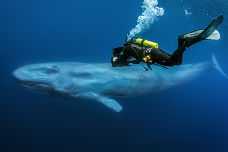 Filming a blue whale in the Pacific (© Richard Herrmann / Silverback Films 2015)