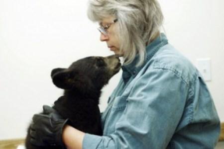 Wild Bear Rescue