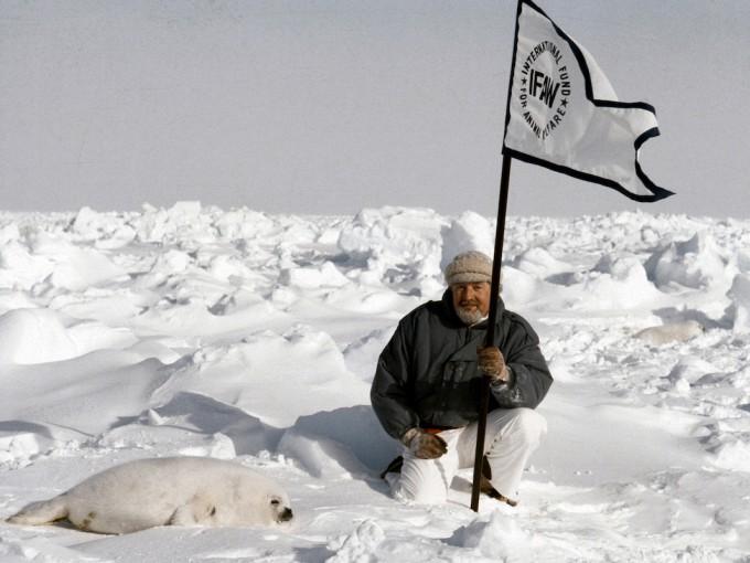 Main character Brian Davies waving an IFAW flag at the harp seal nursery.