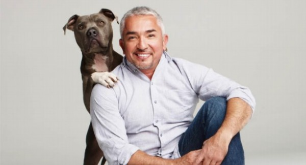 realscreen archive groupe ab unleashes the messenger with cesar millan. Black Bedroom Furniture Sets. Home Design Ideas