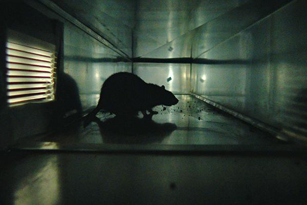 RATS_07