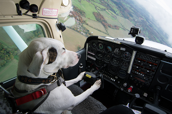 Dogs Might Fly