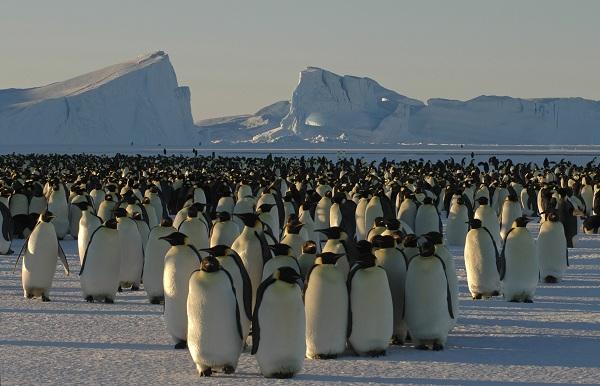Natural World: Snow Animals