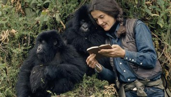 Dian Fossey in the wild with Mountain Gorillas.