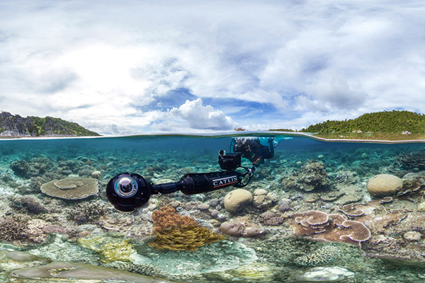 Chasing Coral
