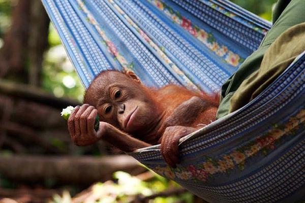 Frontier Borneo