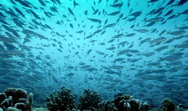 An Ocean Mystery