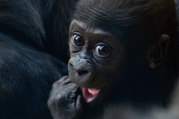 Baby Animals Around the World