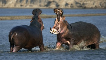 Africa's Hunters 603x400