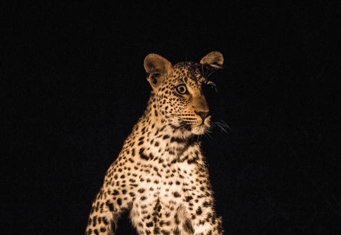 EarthLive-Cougar1 copy