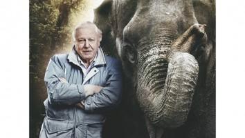 Sir David and Elephant