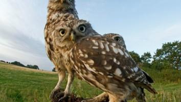 The secret lives of owls
