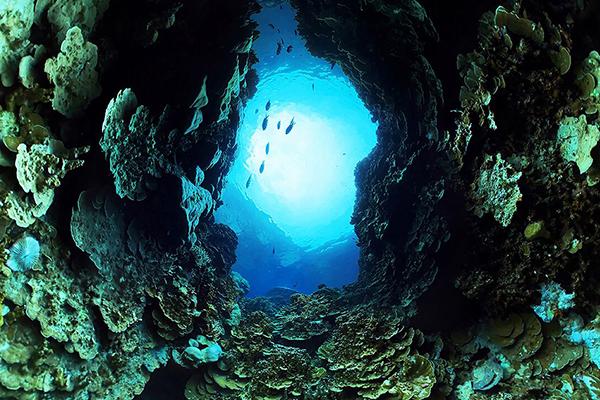 Coral Compass (Elise Ogle & Tobin Asher)_1_preview