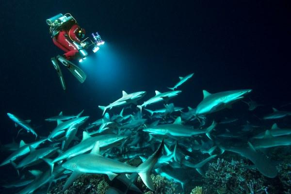 700 Sharks