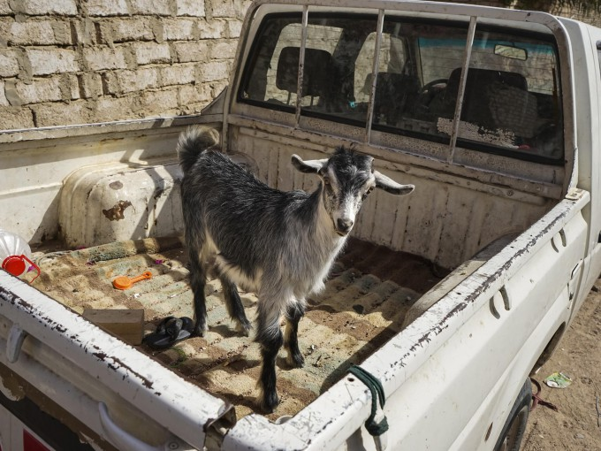 INSIGHT TV Travel with a Goat Image